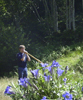 Alphorn with Enzian Flowers